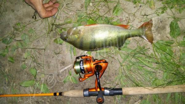 bigfish, альбом Отдых