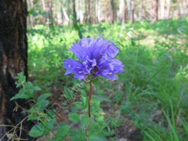 Лесные цветы. , альбом Отдых