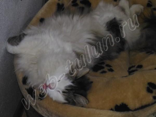 Сладкий сон..., альбом Домашние животные