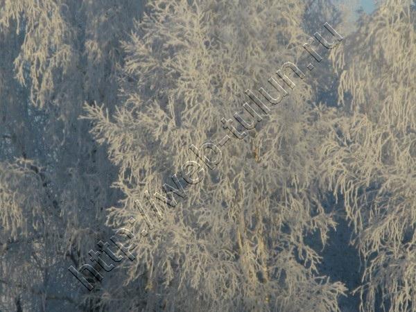 Иней на деревьях Ноябрь 2014г., альбом Природа Тулуна и нашего региона